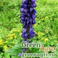 Аконит крымский (Aconitum tauricum) 1 гр.