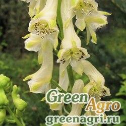 Аконит киринский (Aconitum kirinense) 3,5 гр.