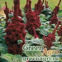"""Амарант багряный (Amaranthus cruentus) """"TOWER"""" (RED) raw Произв. 1000 шт."""