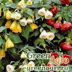 "Абутилон гибридный (Abutilon hybridum) ""Bellvue"" (mix) 10 гр."