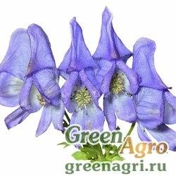 Аконит таежный (Aconitum taigicola) 2,5 гр.
