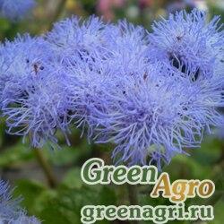"""Агератум мексиканский (Ageratum houstonianum) """"Blue Blazer F1"""" 0.1 гр."""