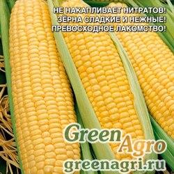 Кукуруза сахарная Алина  (упак-50 гр.)