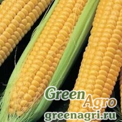 Кукуруза сахарная Виктория  (упак-50 гр.)