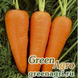 Морковь Ред Кор 0,5 кг