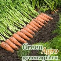 Семена Каскад F1 Морковь (Прецизионные) 1.60-1.80 100 тыс шт