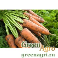 Семена Кордоба F1 Морковь (Прецизионные) 1.40-1.60 100 тыс шт