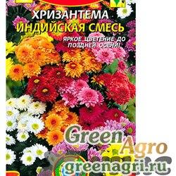 Хризантема индийская смесь Плазма Ц