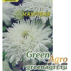 Хризантема Многолетняя махровая белая Цвет.сад Ц