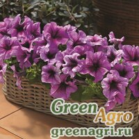 "Семена Петуния крупноцветковая (Petunia grandiflora) ""Bravo F1"" (plum) raw 1000 шт."