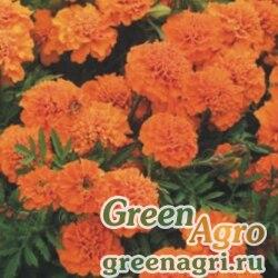"Бархатцы отклоненные (Tagetes patula) ""Champion"" (orange) 15 гр."