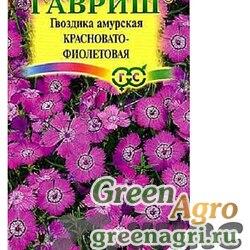 Гвоздика амурская Красновато-фиолетовая Гавриш Ц