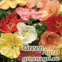 Семена Абутилон гибридный Abutilon hybridum Bella mix select Raw 100