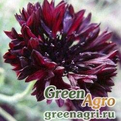 "Василек синий (Centaurea cyanus) ""Black Ball"" (black) 70 гр."