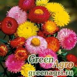 "Бессмертник прицветниковый (Helichrysum bracteatum) ""Tom Thumb"" (mix) 60 гр."