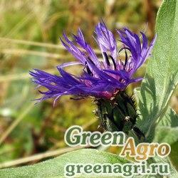 Василек горный (Centaurea montana) (blue) 15 гр.