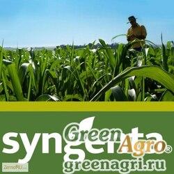 Семена Кукуруза, НК Гитаго, 1 п.е., Syngenta