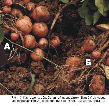 Гуматы на картофеле